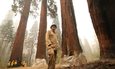 Photos document fight to save world's tallest trees